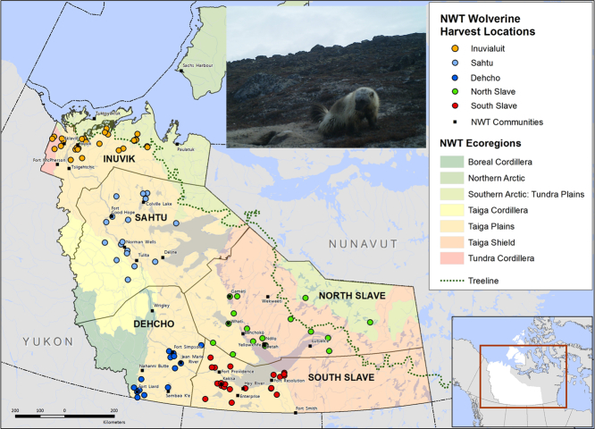 Risk factors and prevalence of antibodies for Toxoplasma gondii in diaphragmatic fluid in wolverines (Gulo gulo) from the Northwest Territories, Canada.
